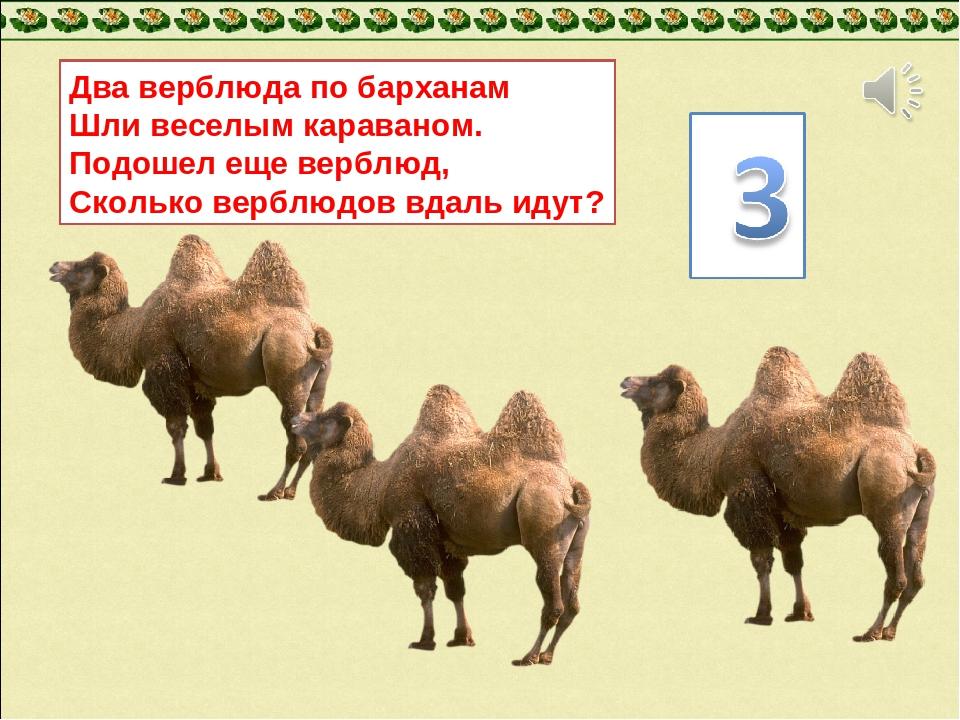 Два верблюда по барханам Шли веселым караваном. Подошел еще верблюд, Сколько...