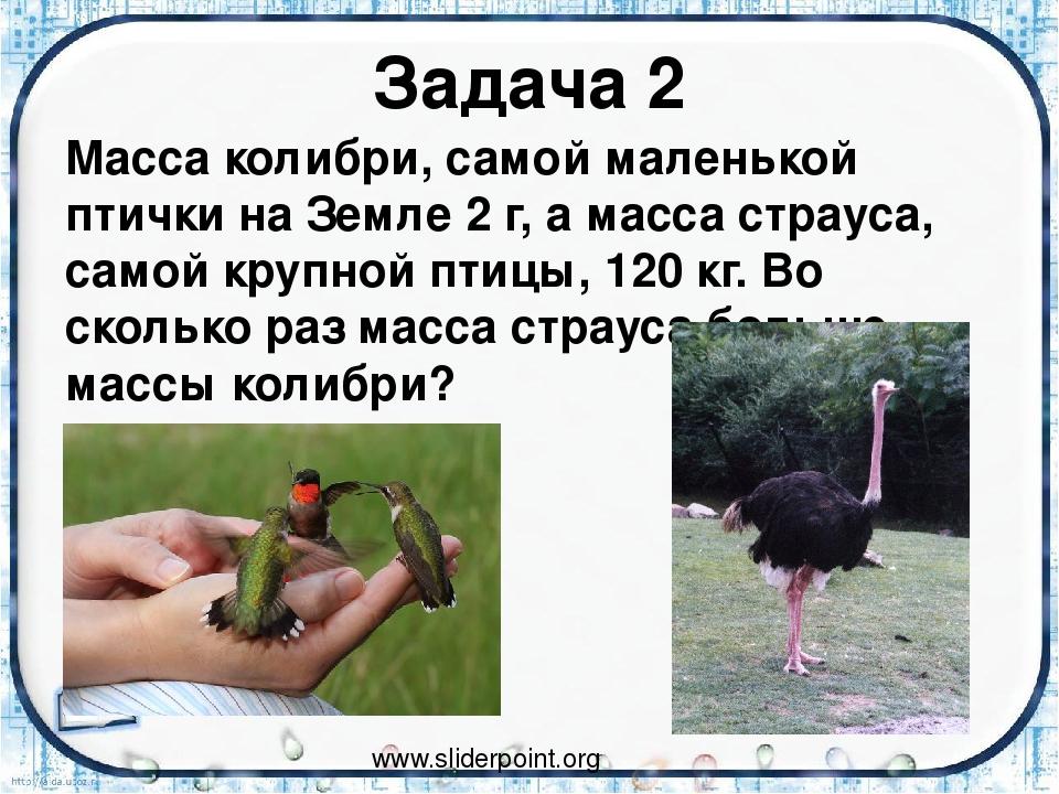 Задача 2 Масса колибри, самой маленькой птички на Земле 2 г, а масса страуса,...