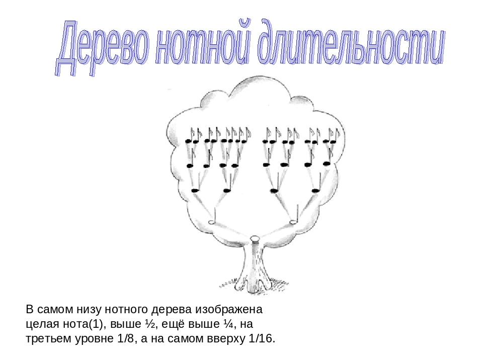 В самом низу нотного дерева изображена целая нота(1), выше ½, ещё выше ¼, на...
