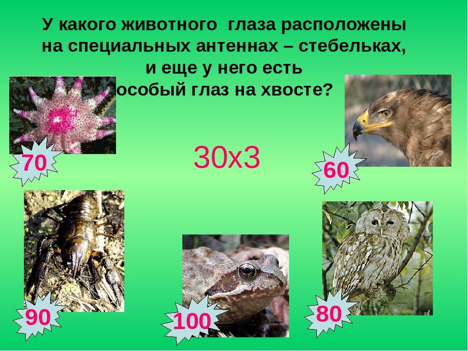 90 70 80 60 У какого животного глаза расположены на специальных антеннах – ст...