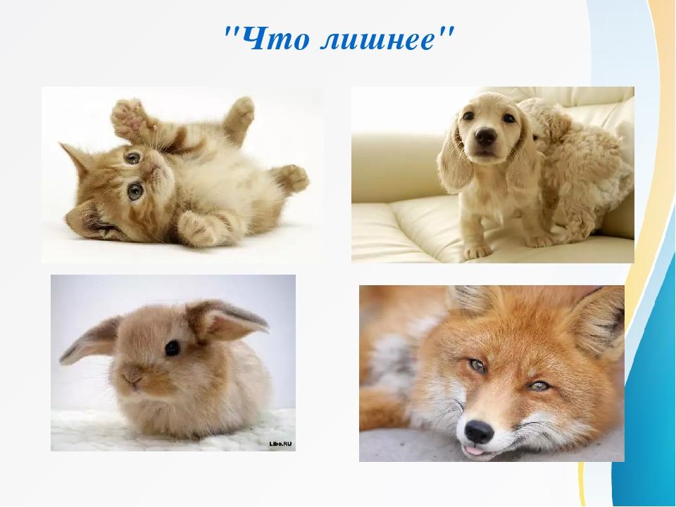 """""""Что лишнее"""""""