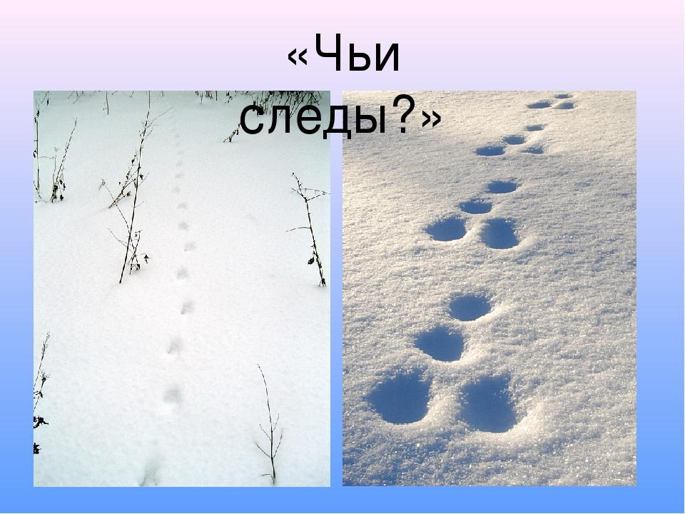 «Чьи следы?»