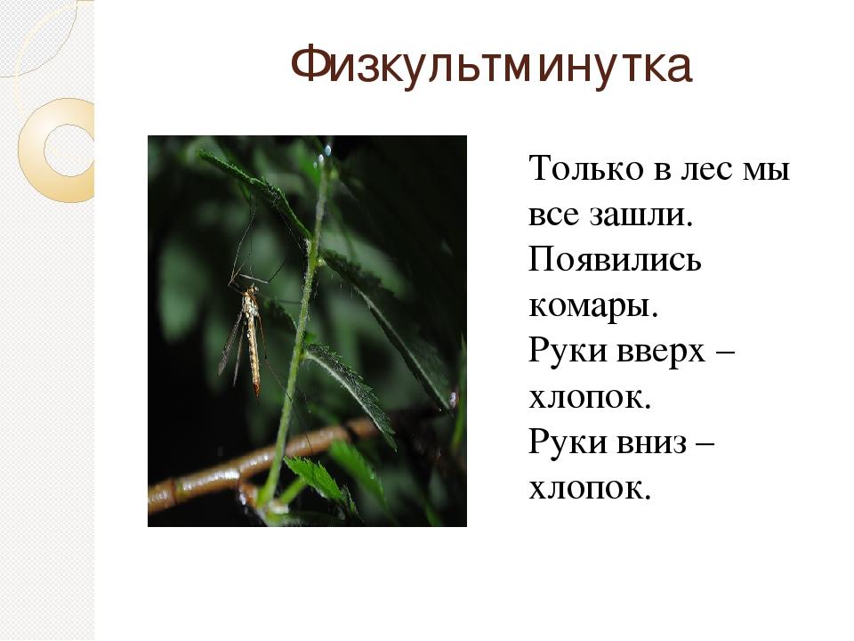 Физкультминутка  Только в лес мы все зашли. Появились комары. Руки вверх –...