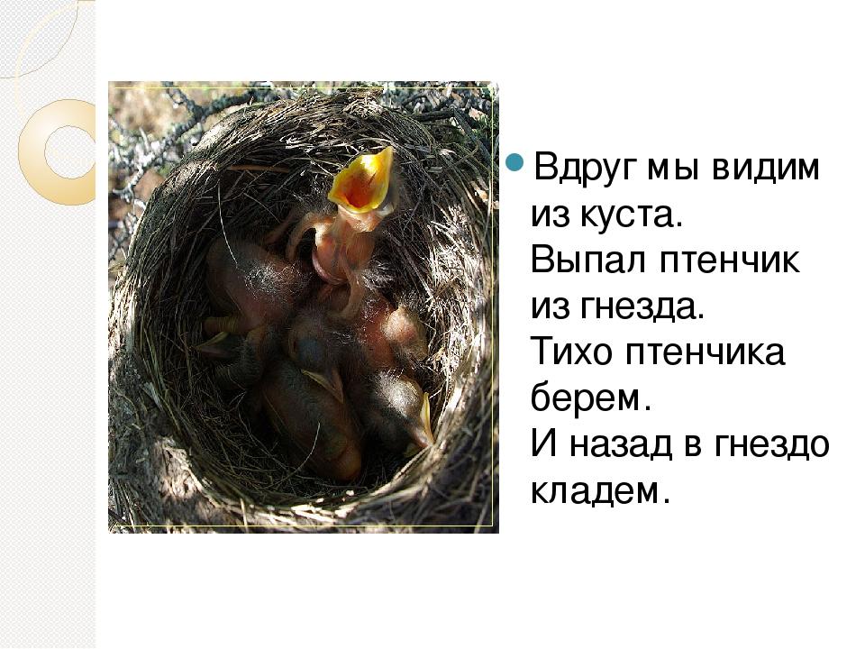 Вдруг мы видим из куста. Выпал птенчик из гнезда. Тихо птенчика берем. И наза...