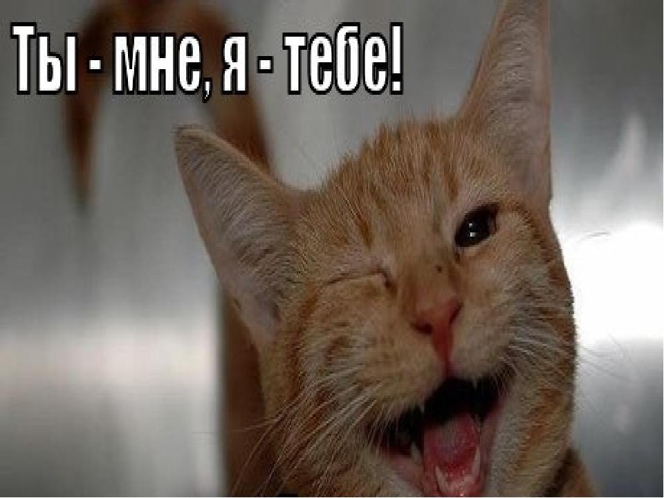 В комнате 4 угла. В каждом углу сидит кошка. Напротив каждой кошки сидят по 3...