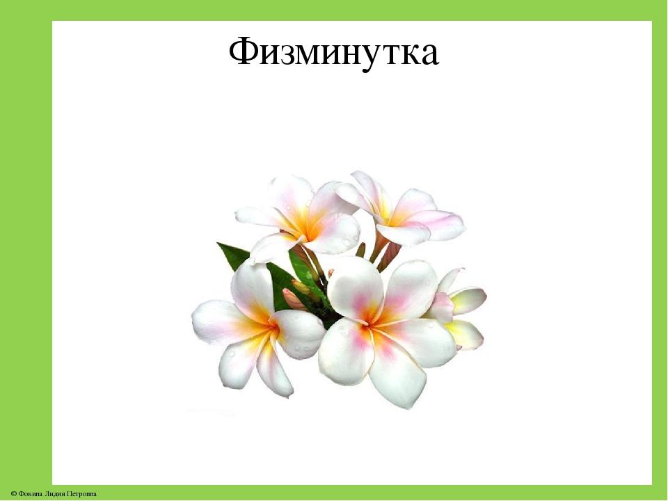 Физминутка © Фокина Лидия Петровна