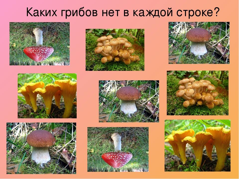 Каких грибов нет в каждой строке?