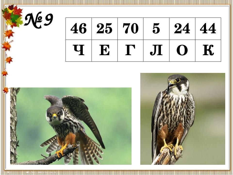№ 9 46 25 70 5 24 44 Ч Е Г Л О К Чегло́к— небольшаяхищная птицаиз семейств...