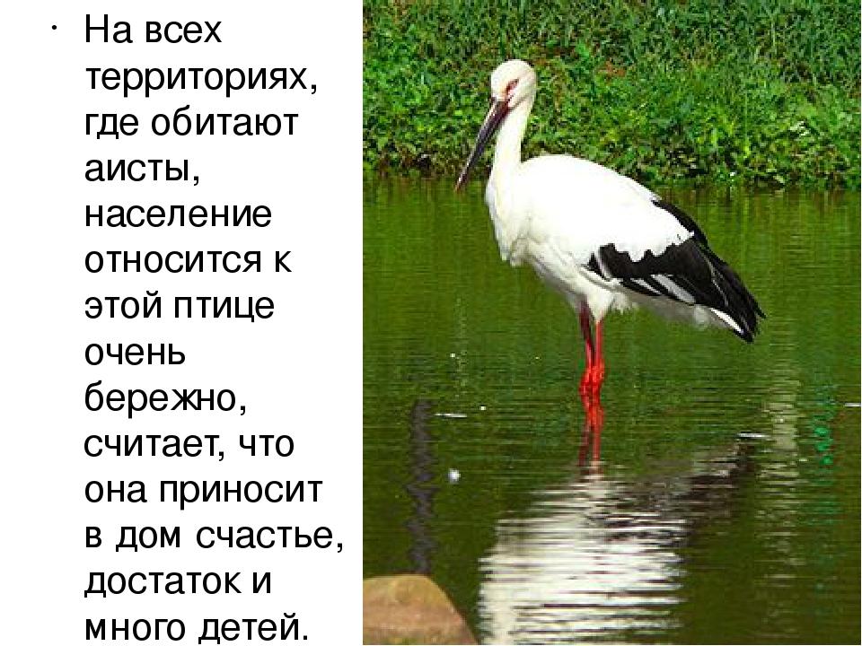 На всех территориях, где обитают аисты, население относится к этой птице очен...
