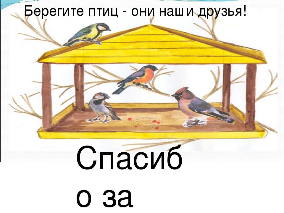 Берегите птиц - они наши друзья! Спасибо за урок!
