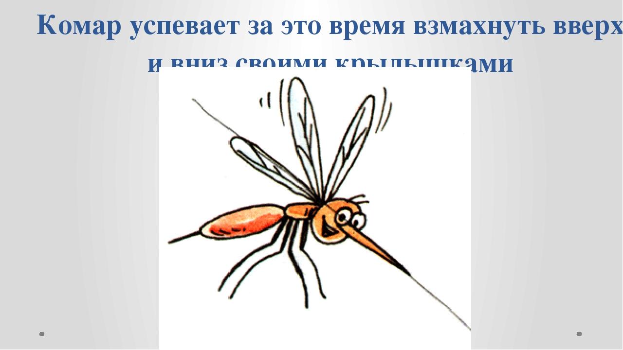 Комар успевает за это время взмахнуть вверх и вниз своими крылышками