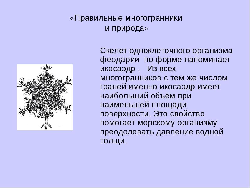 Скелет одноклеточного организма феодарии по форме напоминает икосаэдр . Из вс...