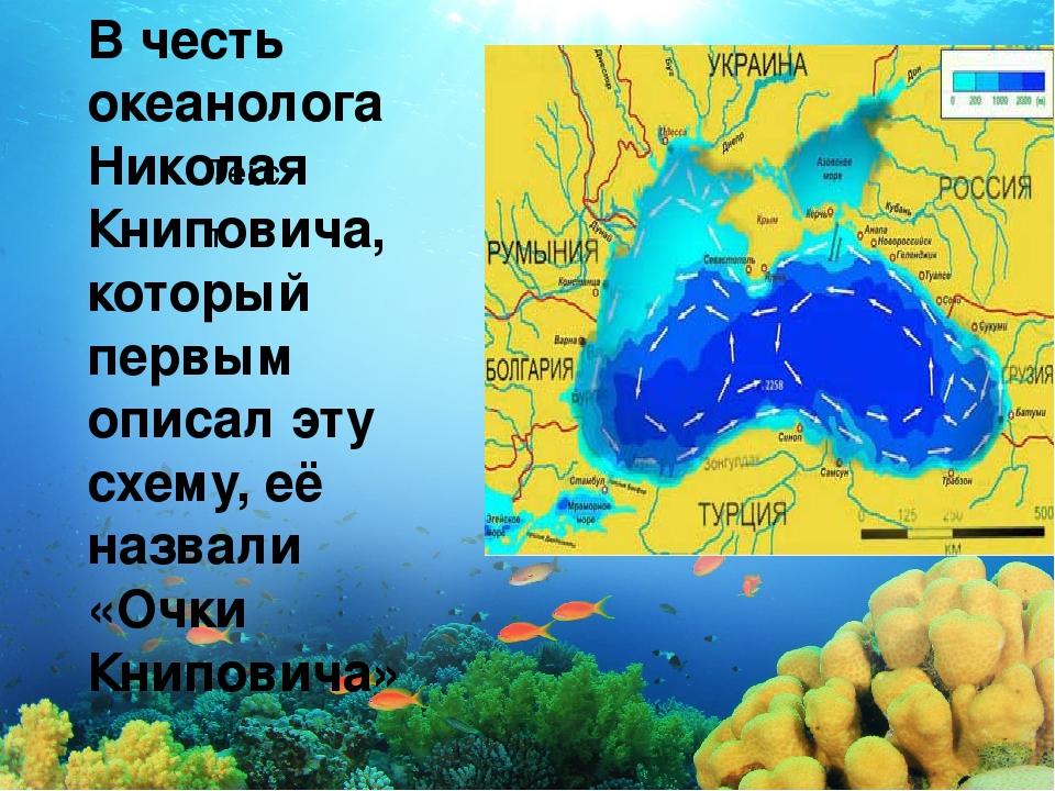 Текст Вчесть океанолога Николая Книповича, который первым описал эту схему,...