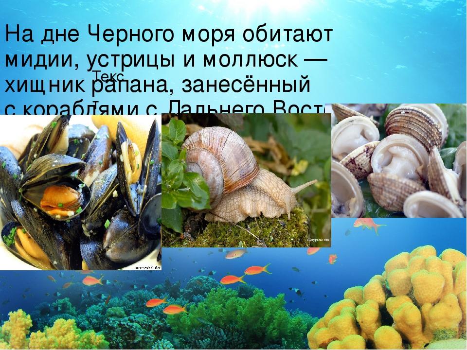Текст Надне Черного моря обитают мидии, устрицы имоллюск— хищник рапана, з...