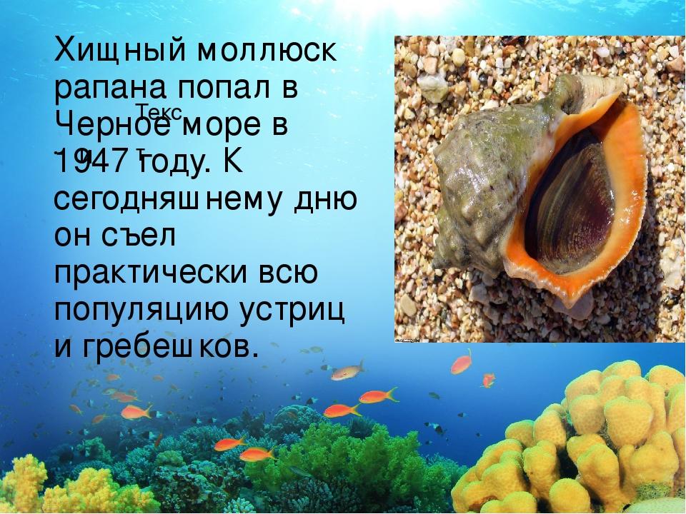 Текст Хищный моллюск рапана попал в Черное море в 1947 году. К сегодняшнему д...