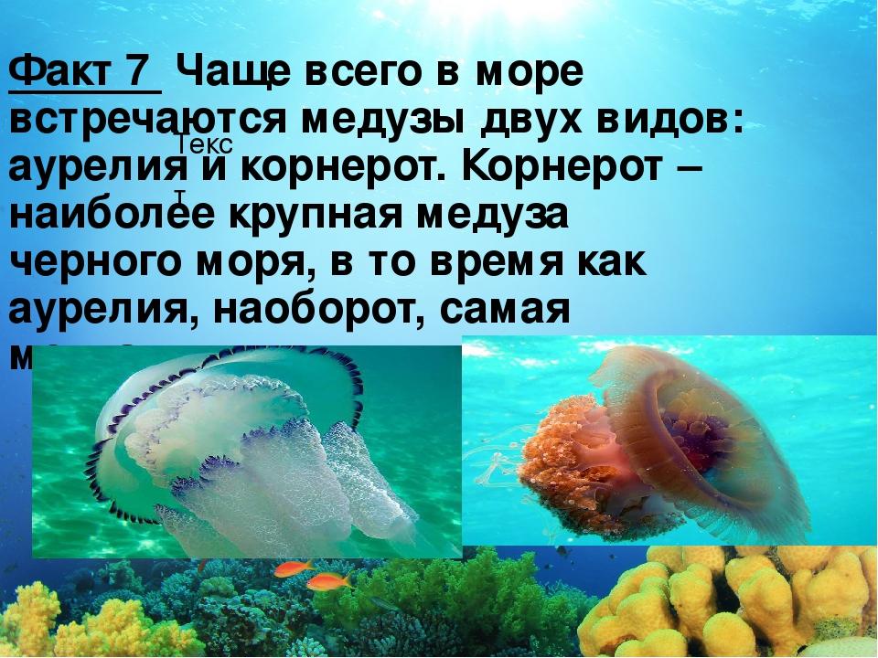 Текст Факт 7 Чаще всего в море встречаются медузы двух видов: аурелия и корне...