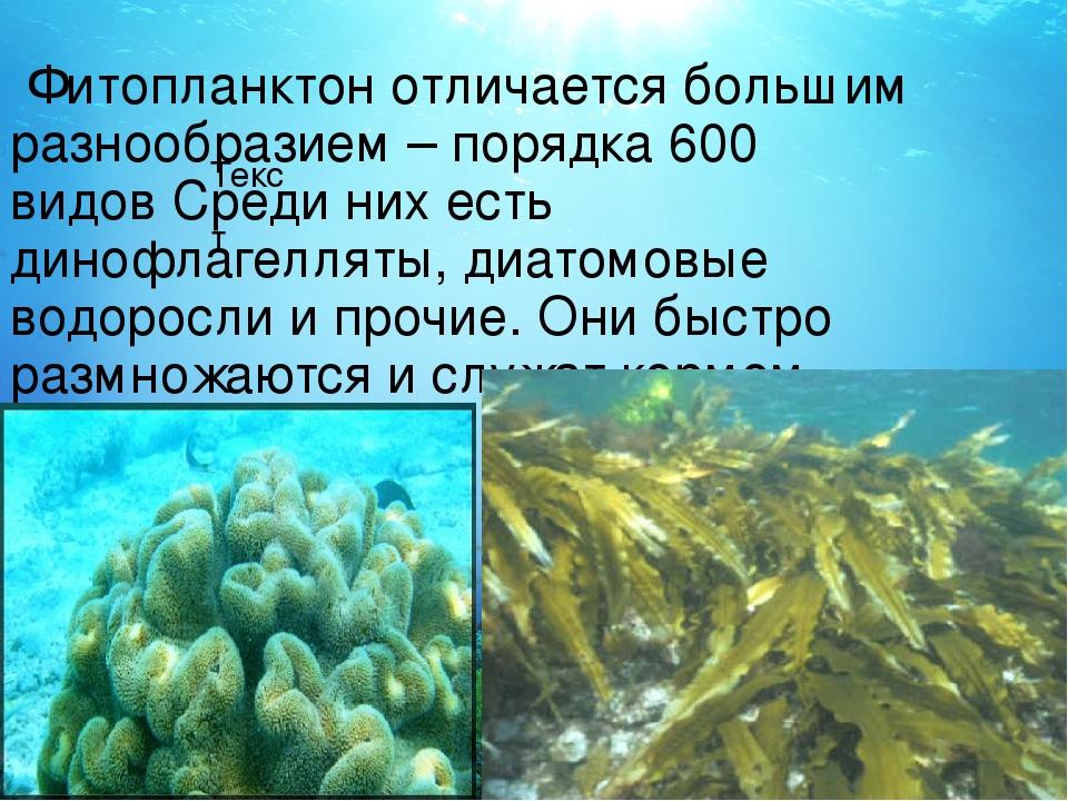 Текст Фитопланктон отличается большим разнообразием – порядка 600 видов Среди...
