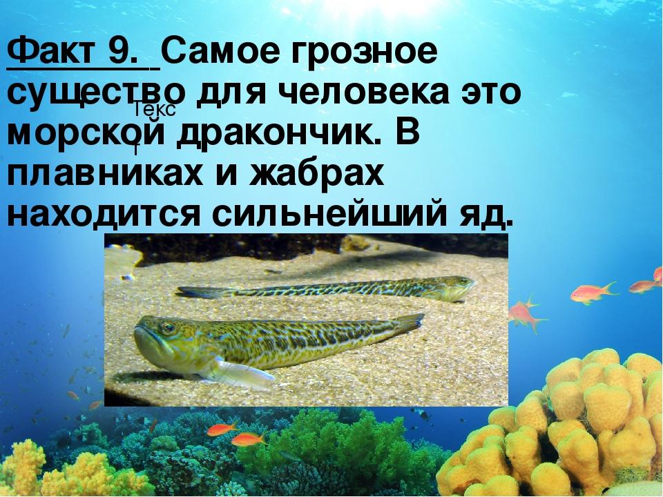 Текст Факт 9. Самое грозное существо для человека это морской дракончик. В пл...