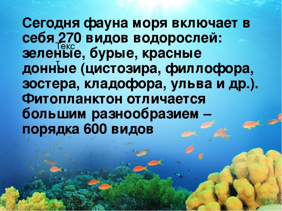 Текст Сегодня фауна моря включает в себя 270 видов водорослей: зеленые, бурые...