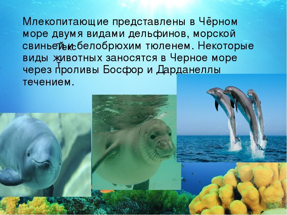 Текст Млекопитающие представлены вЧёрном море двумя видами дельфинов, морско...