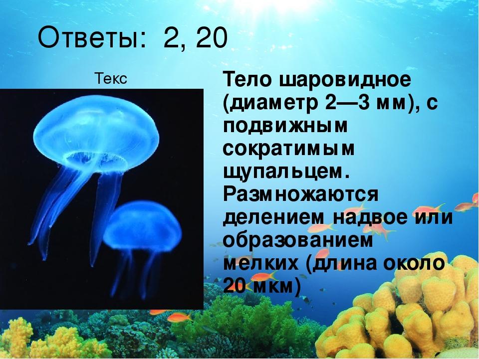 Текст Ответы: 2, 20 Тело шаровидное (диаметр 2—3 мм), с подвижным сократимым...