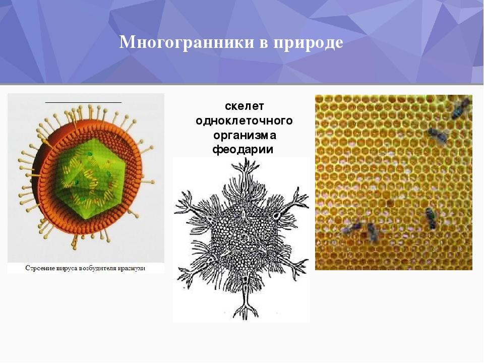 Многогранники в природе скелет одноклеточного организма феодарии