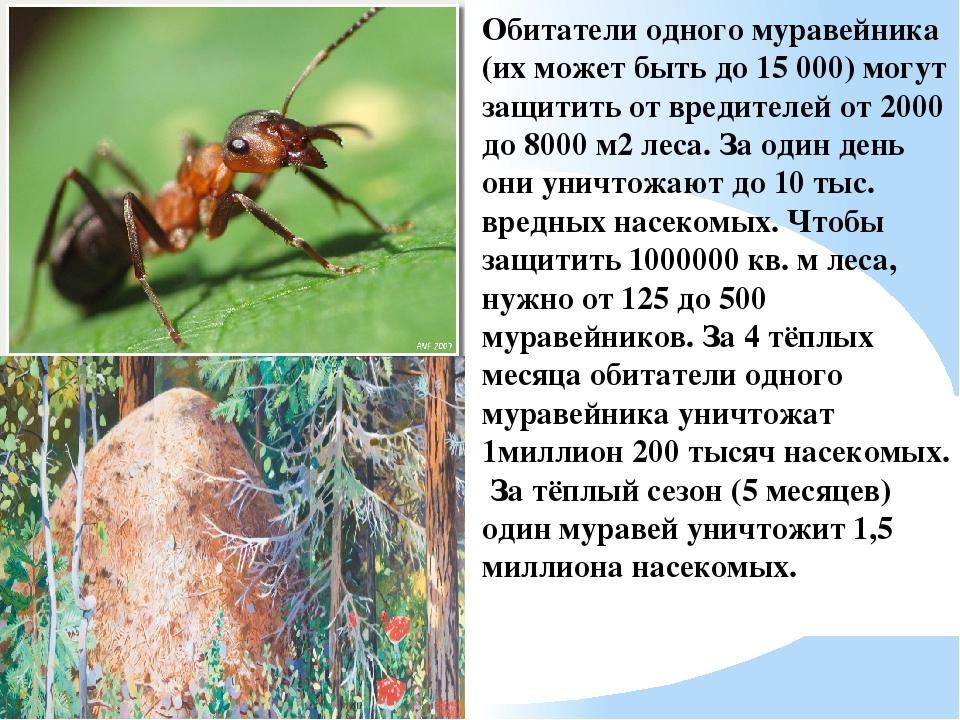 Обитатели одного муравейника (их может быть до 15 000) могут защитить от вред...