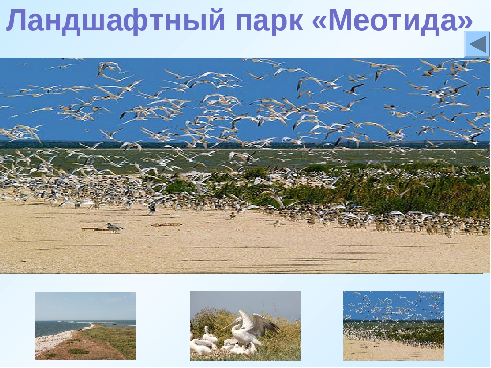 Ландшафтный парк «Меотида» «Меотида»— природный парк на территорииДНР. Реги...