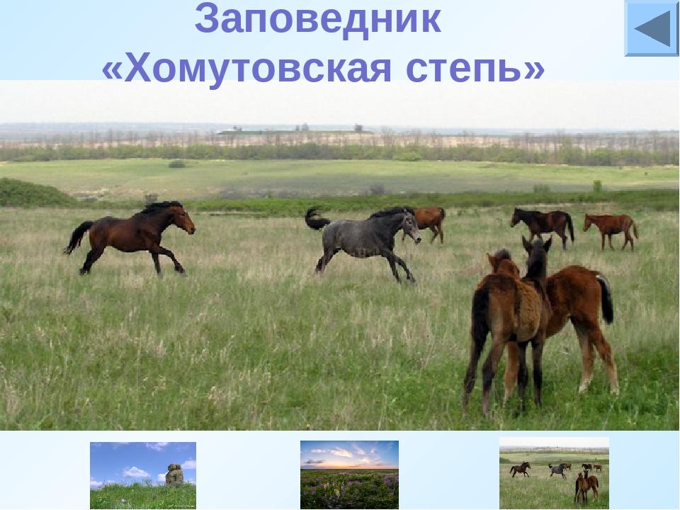 Хомутовская степь- Ботанический заповедник. Статус заповедника Хомутовская с...