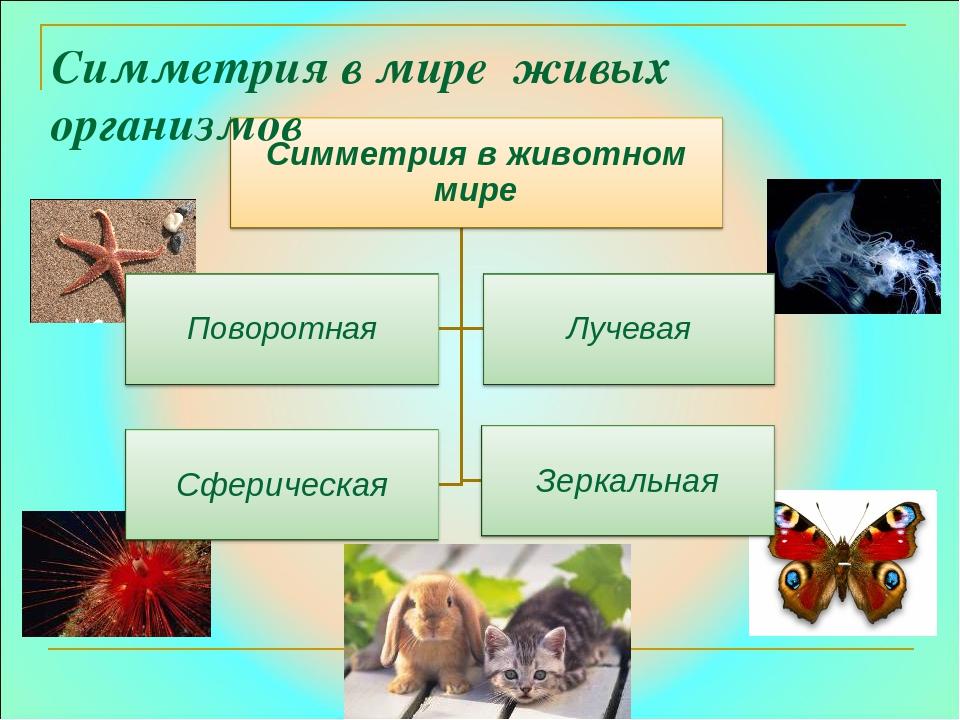 Симметрия в мире живых организмов