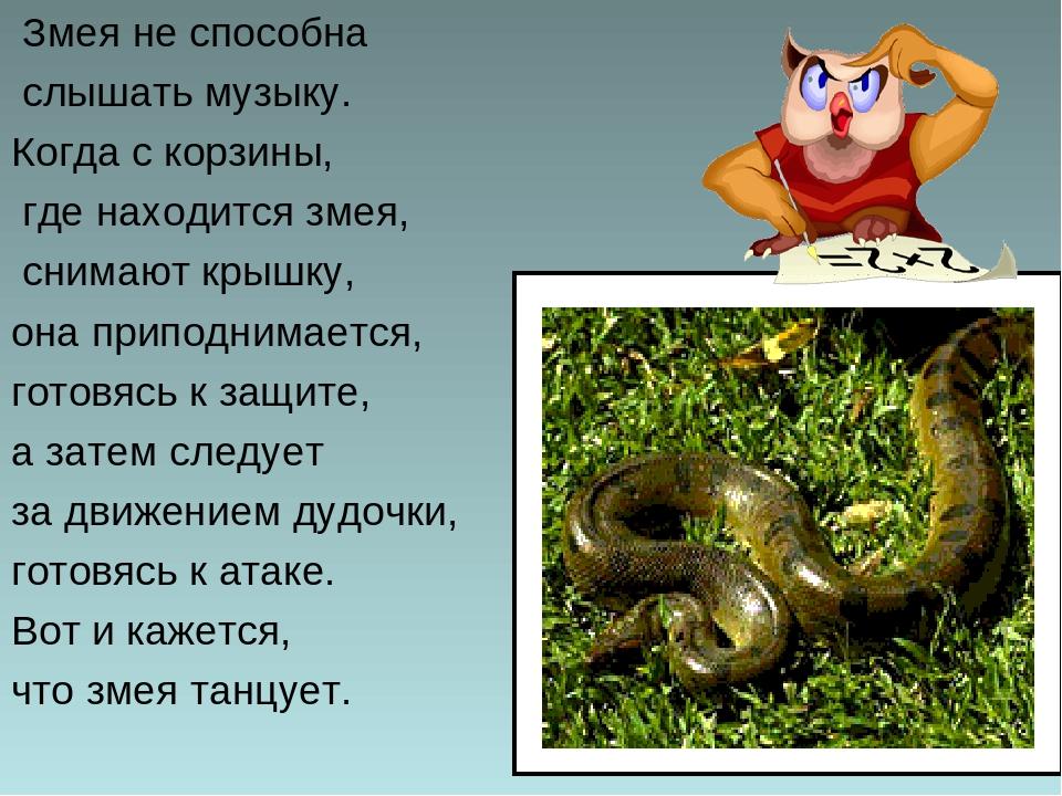 Змея не способна слышать музыку. Когда с корзины, где находится змея, снимают...
