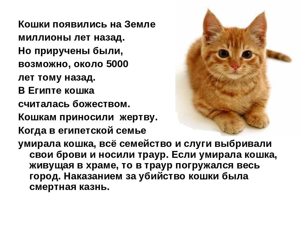 Кошки появились на Земле миллионы лет назад. Но приручены были, возможно, око...