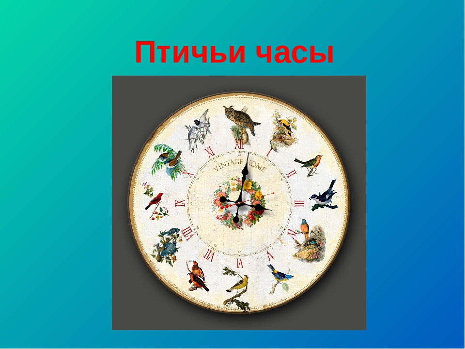 Птичьи часы