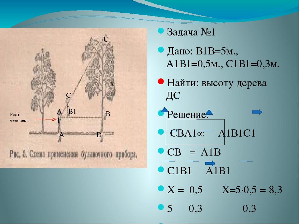 Задача №1 Дано: В1В=5м., А1В1=0,5м., С1В1=0,3м. Найти: высоту дерева ДС Решен...