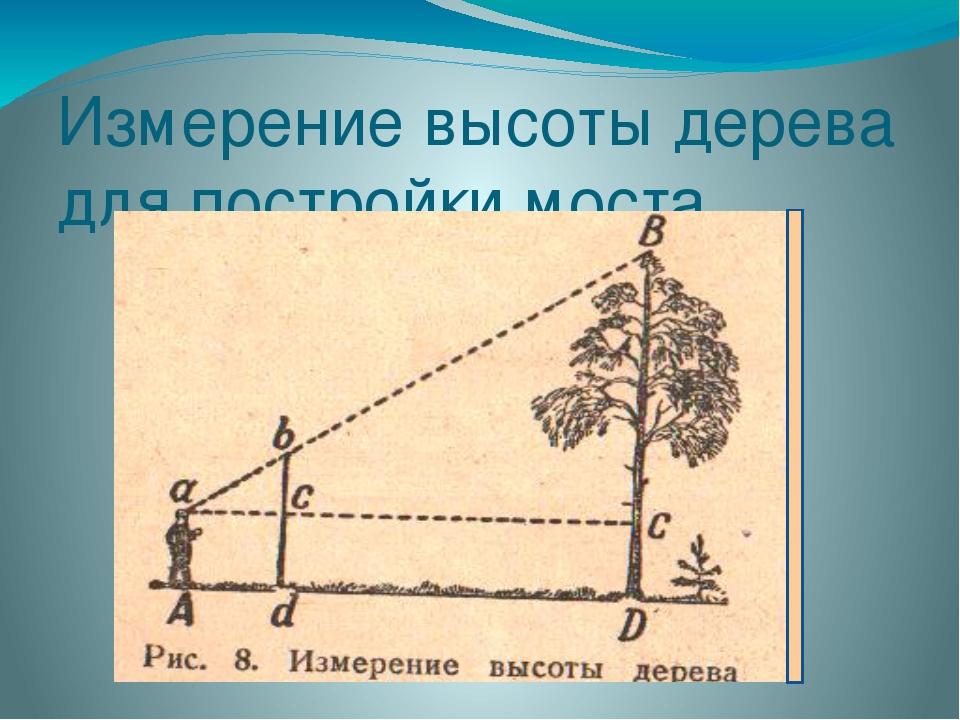 Измерение высоты дерева для постройки моста