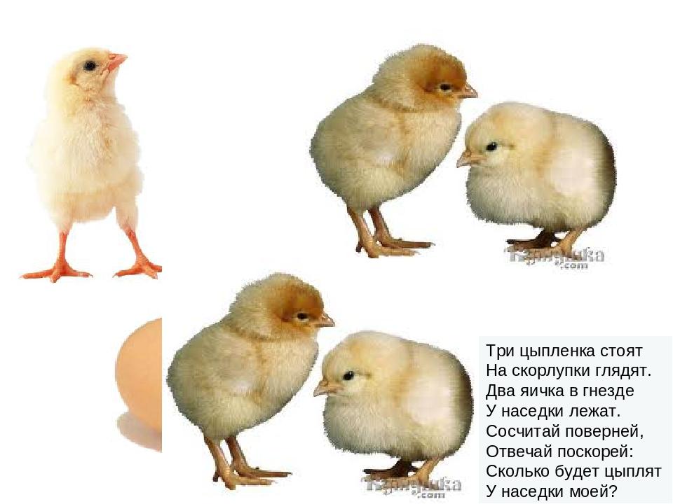 Три цыпленка стоят На скорлупки глядят. Два яичка в гнезде У наседки лежат...