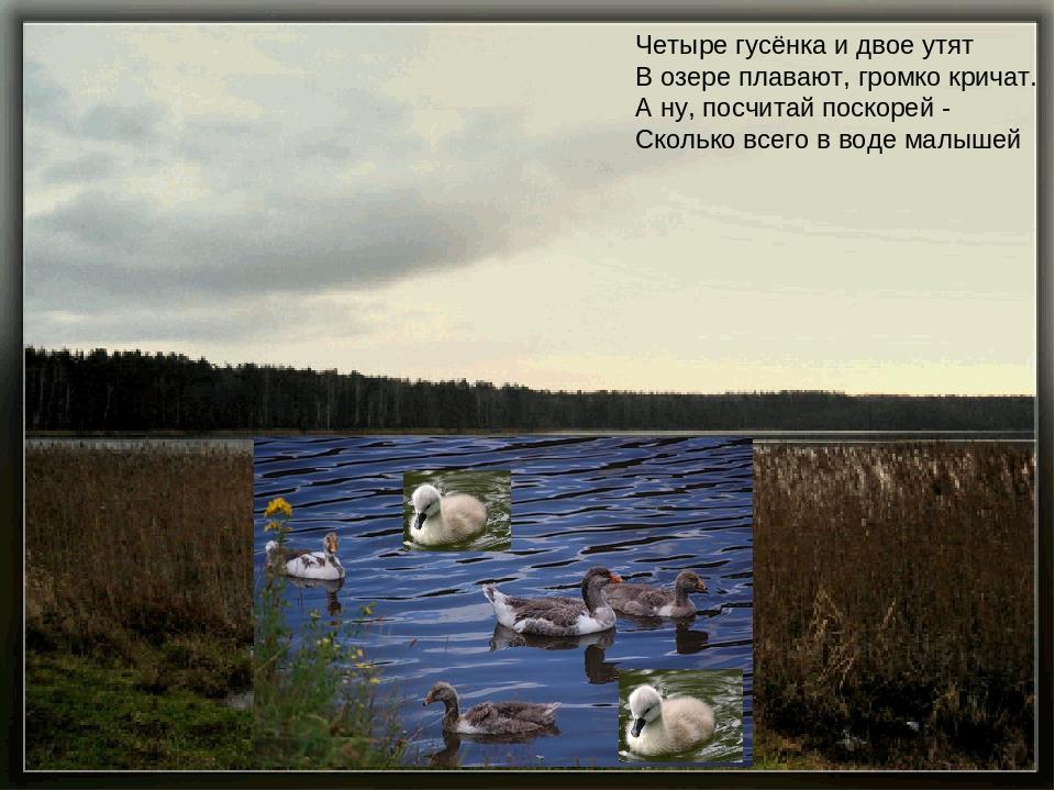 Четыре гусёнка и двое утят В озере плавают, громко кричат. А ну, посчитай п...