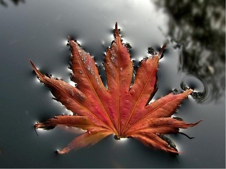Внимательное наблюдение показывает, что основу красоты многих форм, созданных...