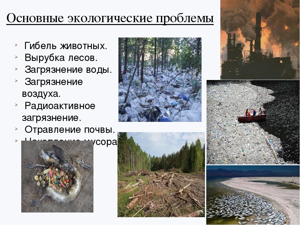 Основные экологические проблемы Гибель животных. Вырубка лесов. Загрязнение в...