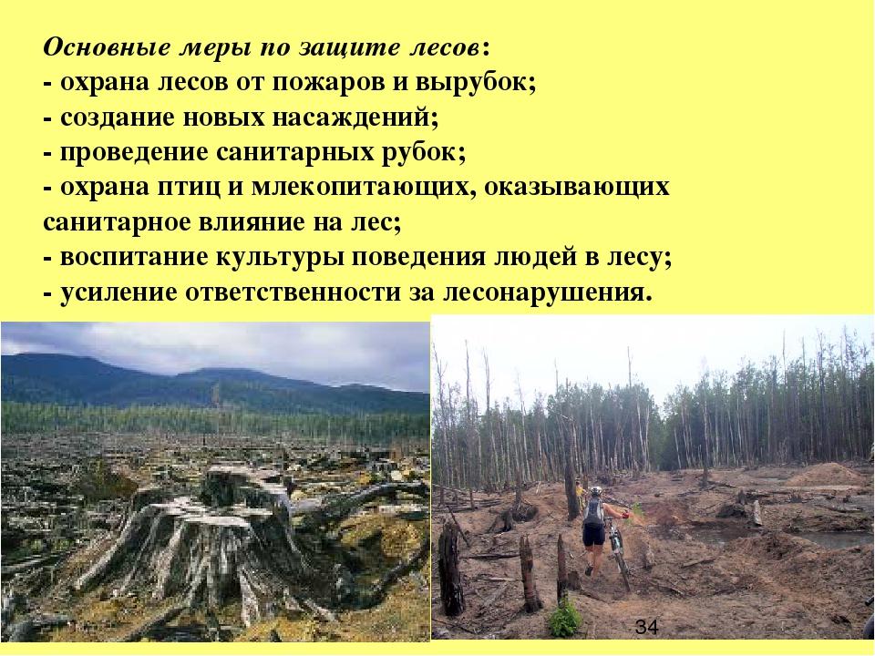 Основные меры по защите лесов: - охрана лесов от пожаров и вырубок; - создани...