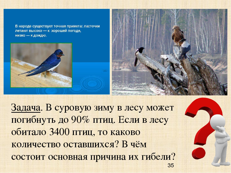 Задача. В суровую зиму в лесу может погибнуть до 90% птиц. Если в лесу обитал...