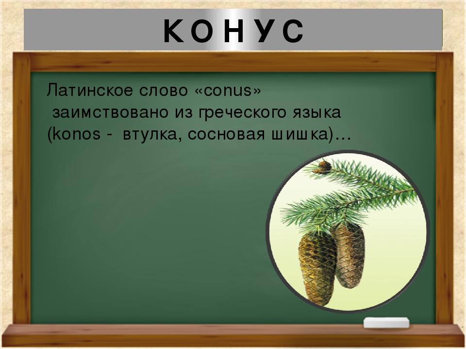К О Н У С Латинское слово «conus» заимствовано из греческого языка (konos - в...