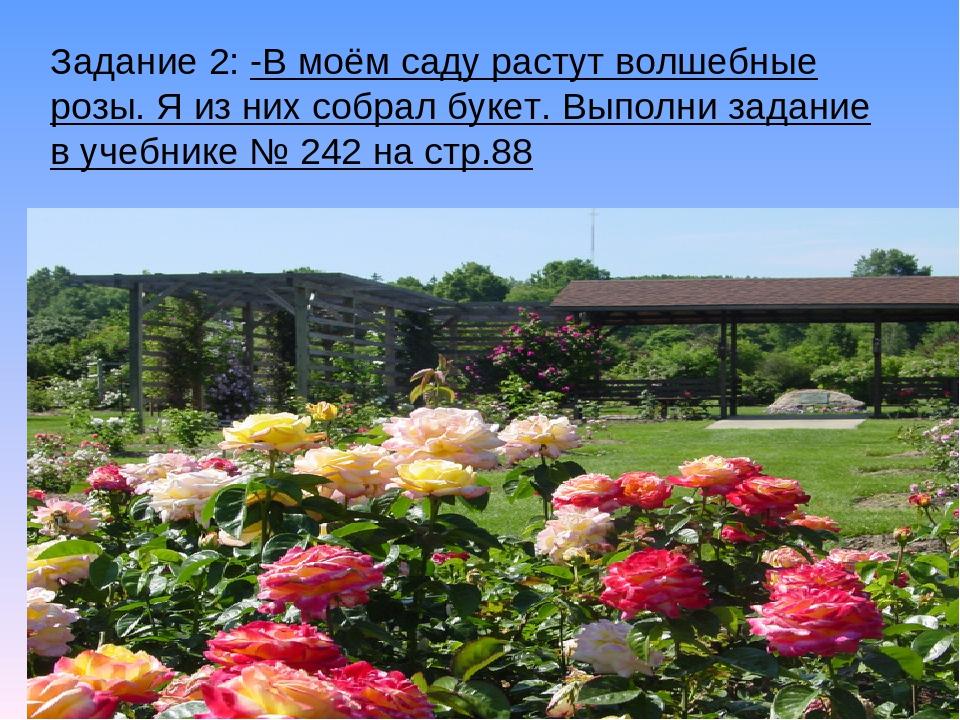 Задание 2: -В моём саду растут волшебные розы. Я из них собрал букет. Выполни...