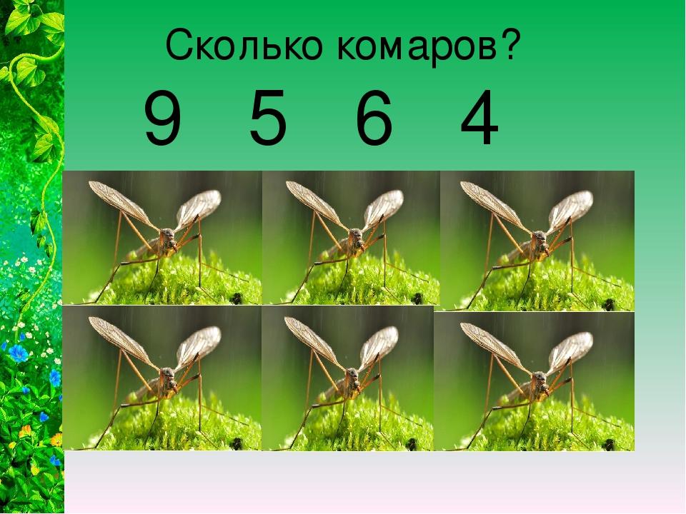 Сколько комаров? 9 5 6 4