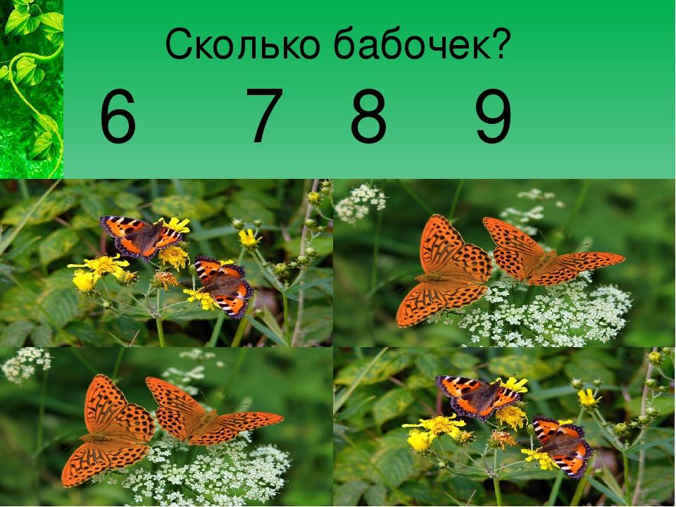 Сколько бабочек? 6 7 8 9