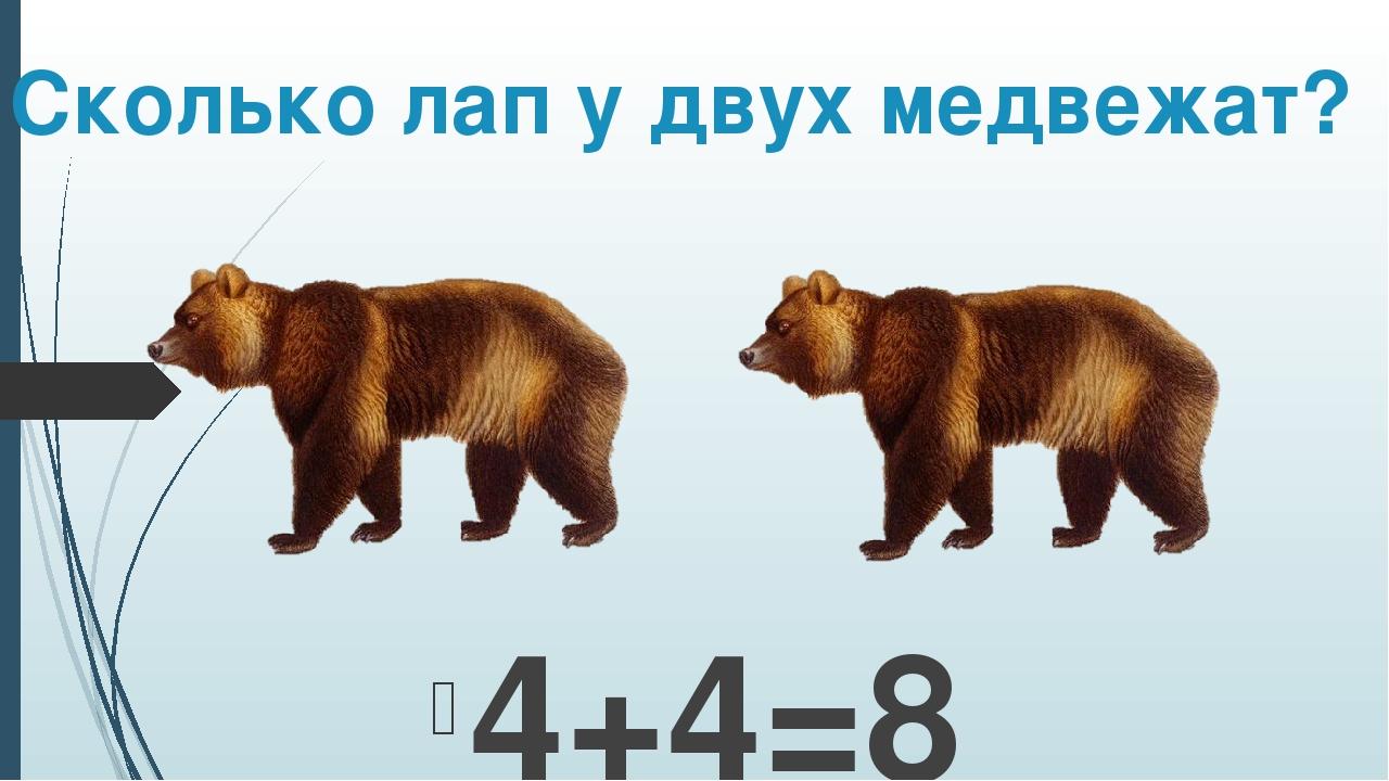 Сколько лап у двух медвежат? 4+4=8