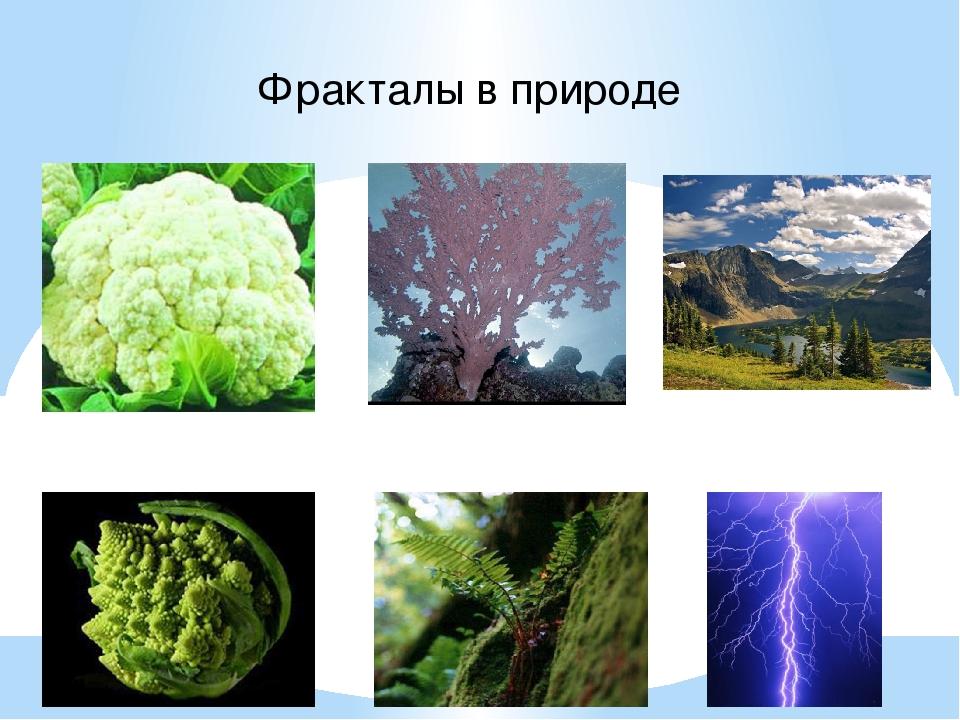 Фракталы в природе